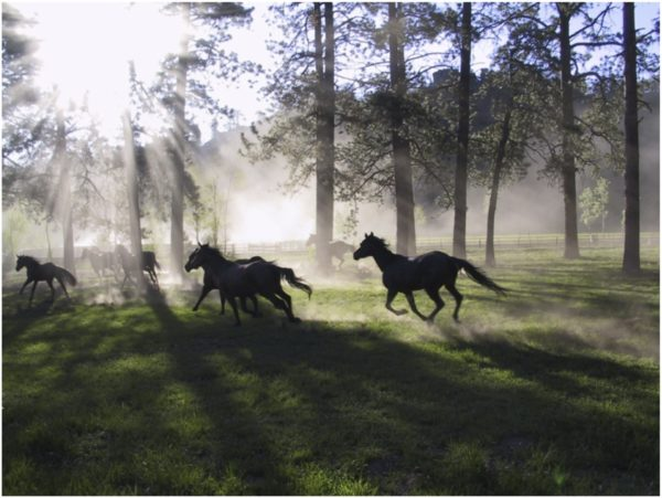 Jingling the horses